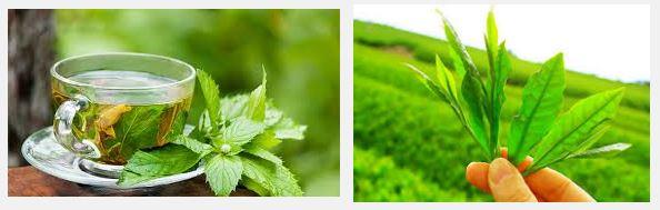 propiedades del extracto de te verde