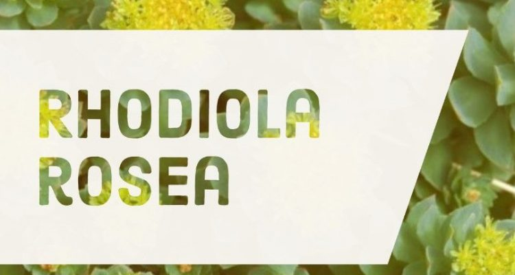 Beneficios Rhodiola rosea